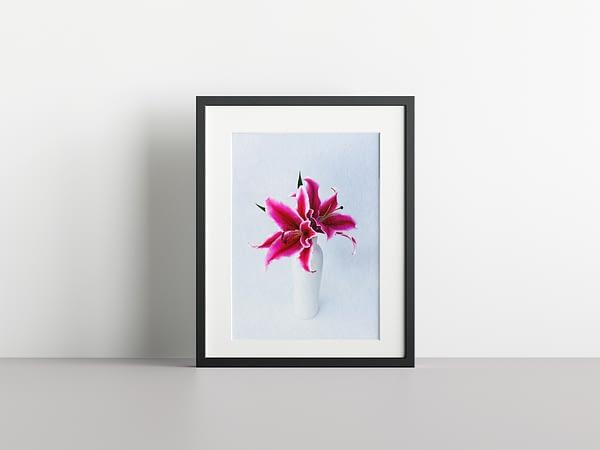 Tiger Lily Framed Wall Art NZ