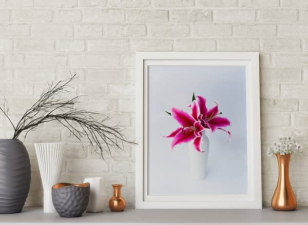 Tiger Lily Framed Art Prints NZ