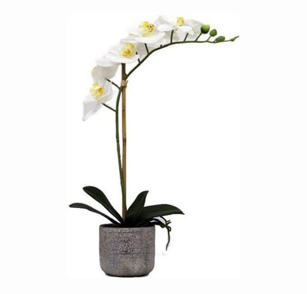Artificial Real Touch White Orchid With Stone Pot - 1 spray