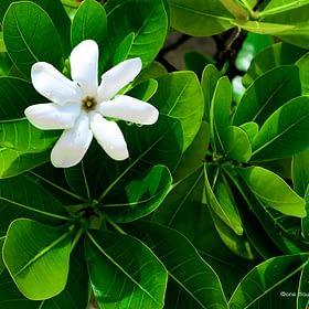 Tropical Flower Wall Art NZ