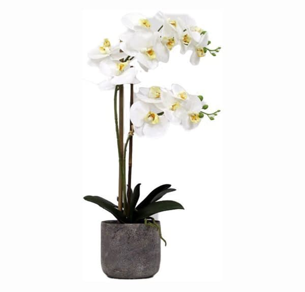 Artificial Real Touch White Orchid With Stone Pot - 2 spray