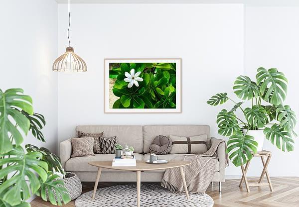 White Flower Framed Wall Art NZ