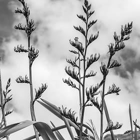 Flax Flower Wall Art NZ