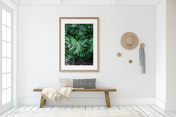 Monstera Framed Art Prints NZ