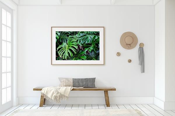 Monstera Framed Wall Art NZ